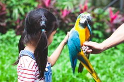 Cute asian child girl touching feather of beautiful macaw parrot in the zoo