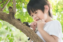 Cute Asian child looking through a magnifying glass at a rhinoceros beetle in the forest