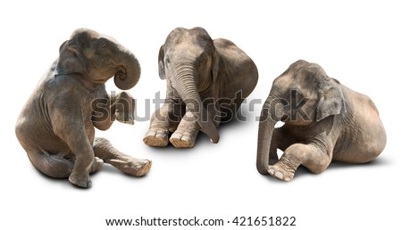 Cute baby asian elephant in various action isolated on white background