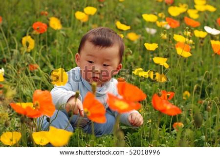 cute baby boy in flower field