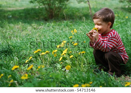 Cute baby boy smelling dandelion flower