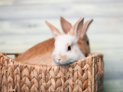 Cute baby bunnies sitting in a wooden basket