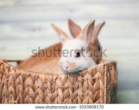 Cute baby bunnies sitting in a wooden basket #1033808170