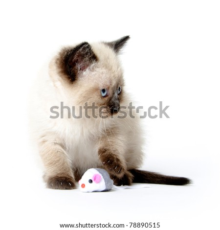 Cute baby cat playing with toy mouse on white background