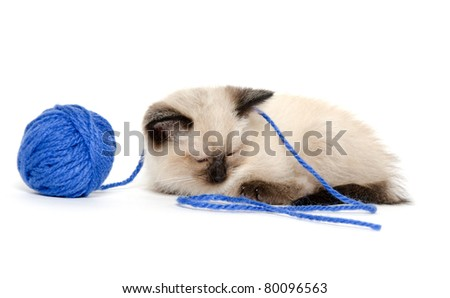 Cute baby cat sleeping next to blue ball of yarn