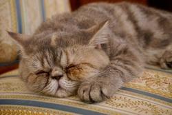 Cute baby cat sleeping on a beautiful textured fabric