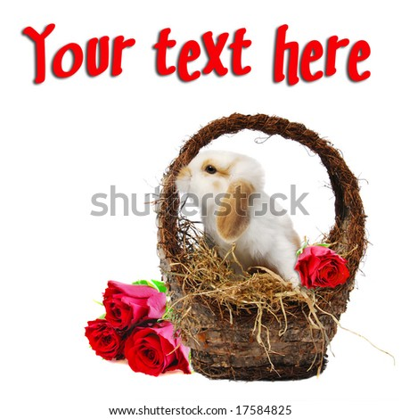 Cute baby easter bunny in a basket filled with hay and red roses isolated on white for conceptual post cards for holidays, birthday or get well soon