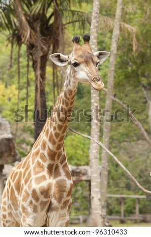 Cute baby giraffe with green nature background.