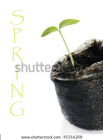 Cute baby green seedling, sprout or shoot ready to be planted during spring or on earth day with white copy space.