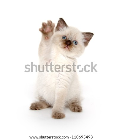 Cute baby kitten on white background - stock photo