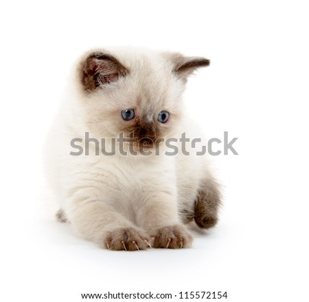 cute baby kitten playing on white background