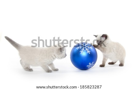 Cute baby kitten playing with large Christmas ornament on white background