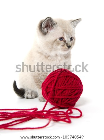 Cute baby kitten playing with red yarn on white background