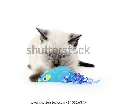 Cute baby kitten playing with toy mouse on white background