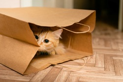 Cute baby kitten sitting inside of brown paper grocery sack.