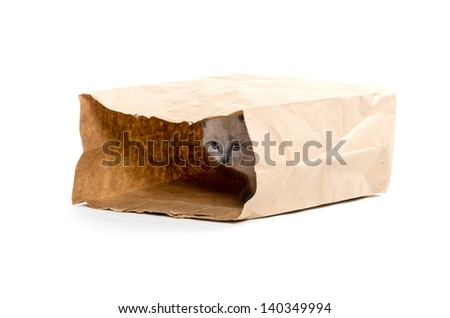Cute baby kitten sitting inside of brown paper grocery sack on white background