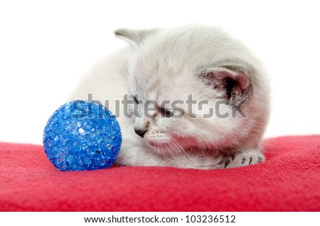 Cute baby kitten sitting next to blue ball on red blanket