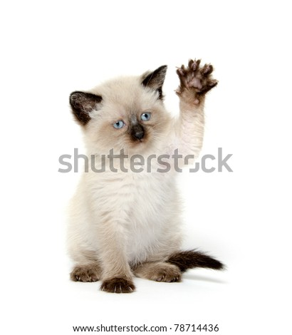 Cute baby kitten waving its paw on white background