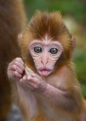 cute Baby Monkey eating in a forest