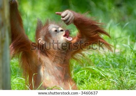 cute baby orangutan playing on the grass