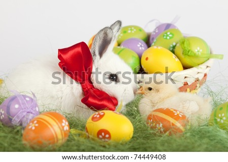 Cute baby rabbit and a small chicken sitting on grass, kissing in front of a basket full of colorful Easter painted eggs. High resolution image taken in studio.