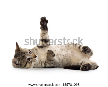 Cute baby tabby American short hair kitten on white background