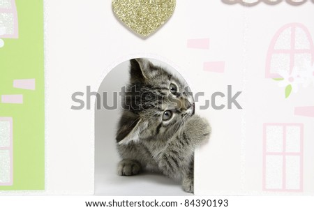 Cute baby tabby cat looking out of the doorway of a doll house on white background