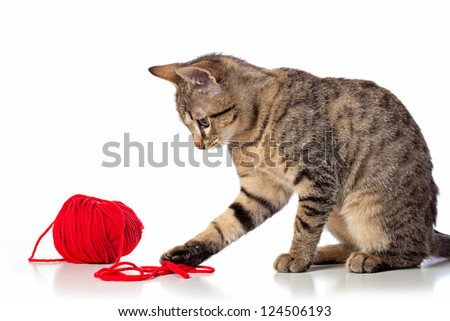 Cute baby tabby cat playing with ball of red yarn on white background