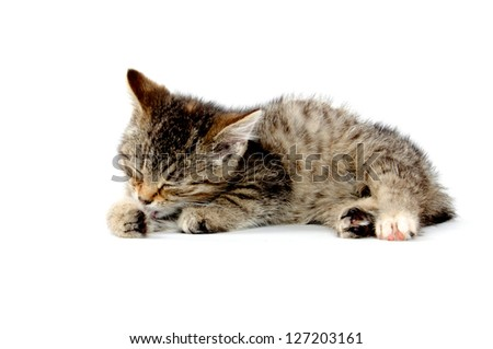 Cute baby tabby cat taking bath and laying down on white background