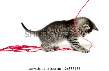 Cute baby tabby kitten playing with red yarn on white background