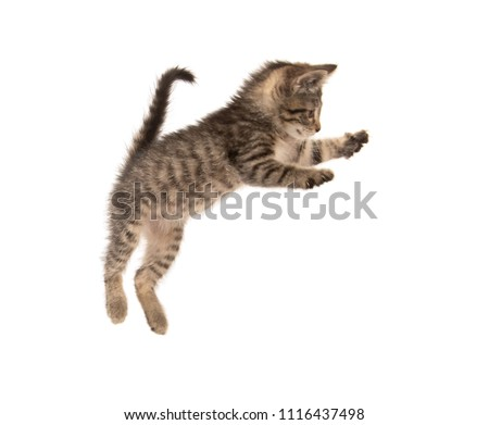 Cute baby three-month-old tabby kitten isolated on white background