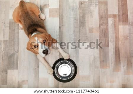 Photo of  Cute Beagle dog lying on floor near bowl, top view