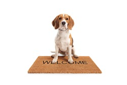 Cute beagle dog sitting on a brown welcome mat isolated on white background