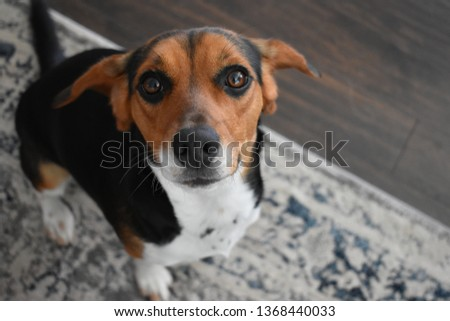 Cute Beagle Puppy #1368440033