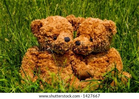 Cute bears enjoy the sun