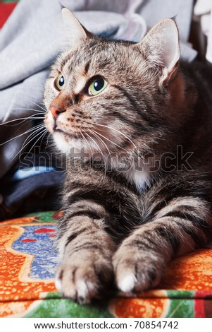 Cute beautiful cat relaxing on sofa
