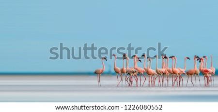 Cute beautiful flamingo #1226080552