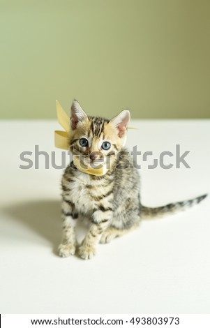 Cute bengal kitten on the wooden table. #493803973