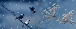 cute birds in winter time
