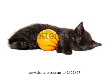 Cute black american shorthair kitten with toy basketball on white background