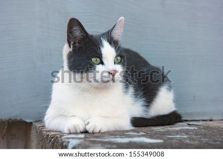 Cute black and white cat.