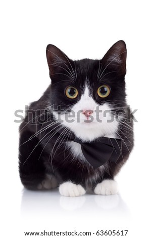 cute black and white cat wearing a neck bow looking at the camera