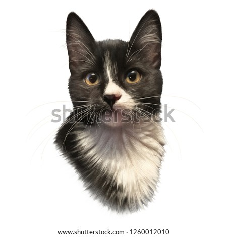 Cute black and white cat with big eyes isolated on white background. Portrait of pet. Realistic drawing of kitten. Good for print T-shirt, pillow. Hand painted illustration. Animal art collection: Cat