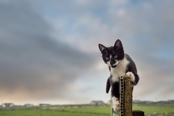 Cute black and white kitten playing on an old weathered parking fee sign, Green field and beautiful colorful sky out of focus in the background. Concept playfulness, child carefree times