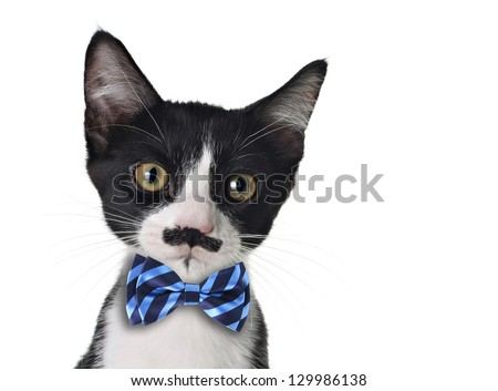 Cute black and white kitten with mustache and bow tie