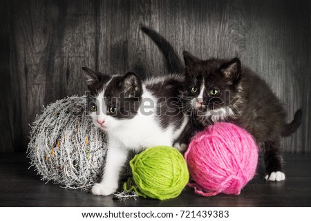 Cute black and white kittens playing with yarn (shallow dof)