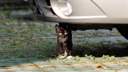 Cute black cat walking under car in parking lot.