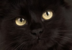 cute black cat with yellow eyes on black background, close-up.