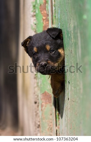 cute black dog and green fence