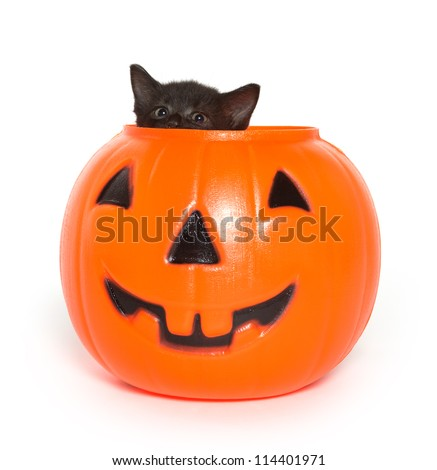 Cute black kitten climbing out of a plastic Halloween jack-o-lantern on white background